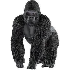 Image of Gorilla Männchen