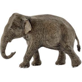 Image of Asiatische Elefantenkuh